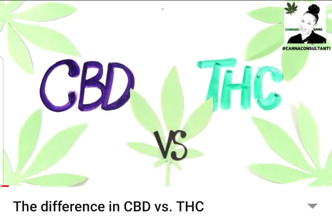 The Difference CBD vs. THC