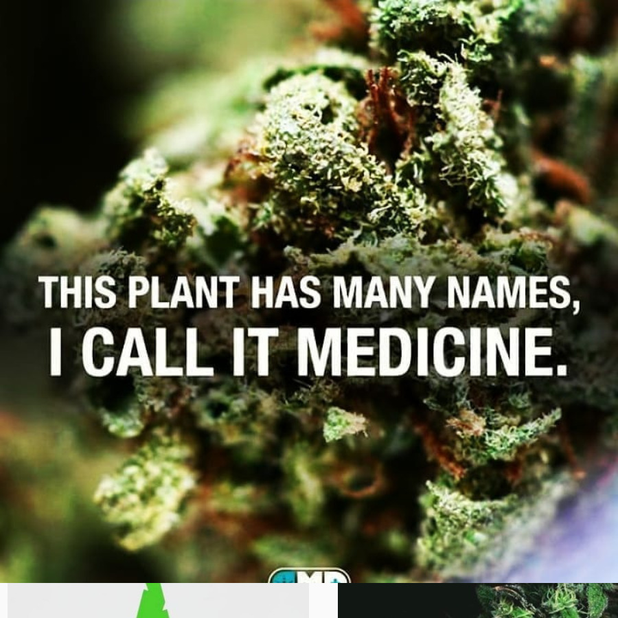 This Plant Has Many Names, I Call it Medicine
