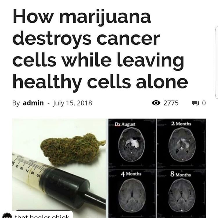 How Cannabis Destroys Cancer Cells While Leaving Healthy Cells Alone