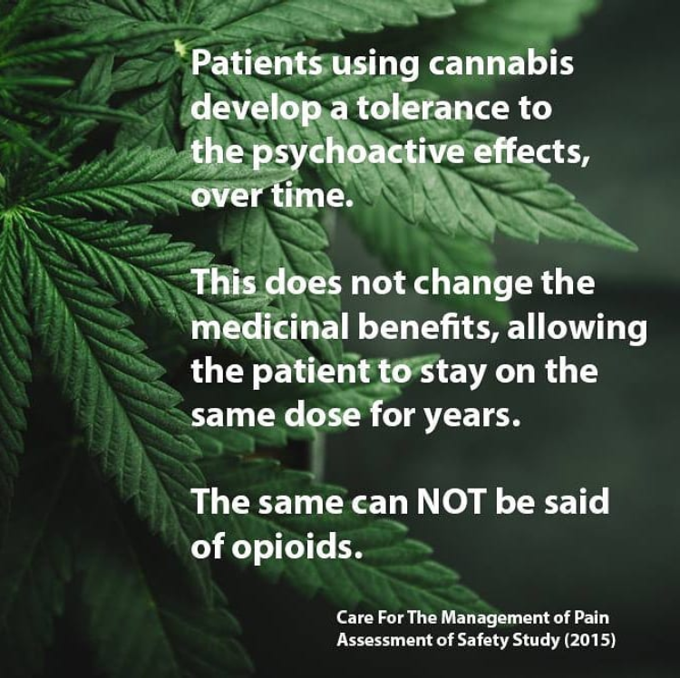 Tolerance to the Psychoactive Effects of Cannabis