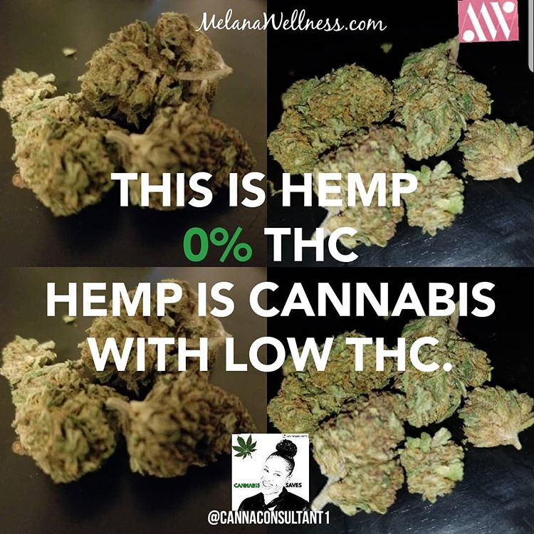 Hemp is  Just Cannabis with Low THC Content