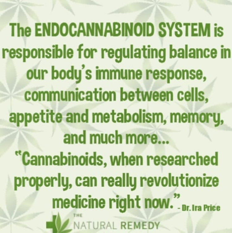 The Endocannabinoid System is Responsible for Regulating Balance Within the Body