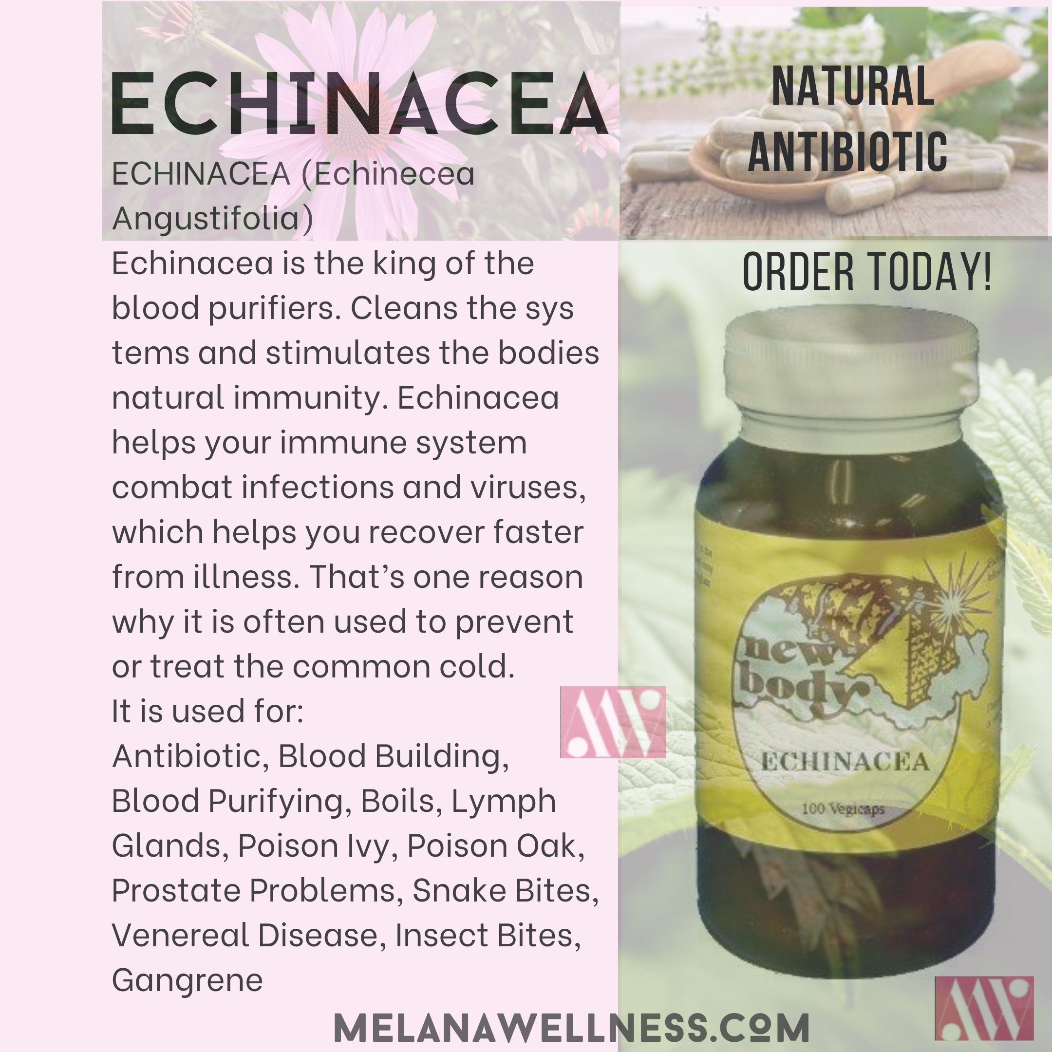 Benefits of Echinacea and How it Can Help You!