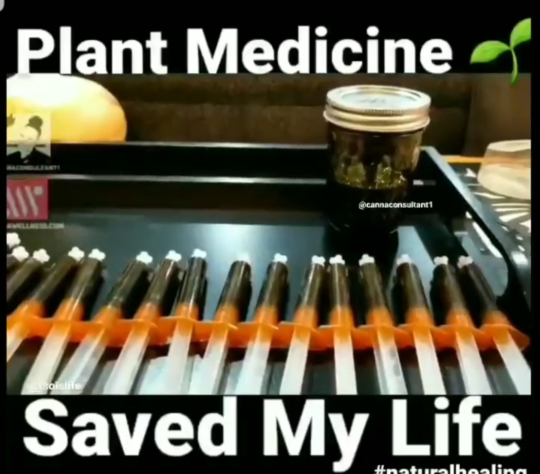 Plant Medicine Saved My Life!